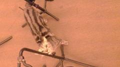 顯然練團室有貓真好